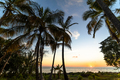 Exotic palms growing at seaside in Caribbean in sunset lights. - PhotoDune Item for Sale