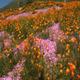 flower landscape - VideoHive Item for Sale