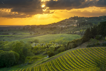 Casale Marittimo village, vineyards and landscape in Maremma. Tu