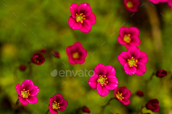 Red flowers against the background of grass