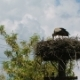 Stork Feeds Children in the Nest - VideoHive Item for Sale