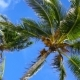 Film of Caribbean Palm Trees Low Angle View - VideoHive Item for Sale