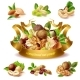 Vector 3D Realistic Set of Different Nuts - GraphicRiver Item for Sale