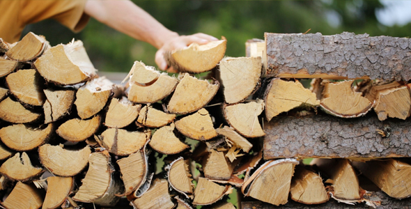 Man is Making Pile of Logs Outdoors in the Forest