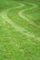 Tire track in the grass - PhotoDune Item for Sale