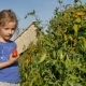 A Beautiful Curly Girl Eats Tomatoes Right in the Garden, Tearing It Off a Branch Organic Farming - VideoHive Item for Sale