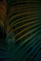 Tropical Palm leaf background. - PhotoDune Item for Sale