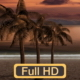 Sunset Palm Trees On The Beach - VideoHive Item for Sale
