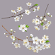 Blossoming Tree Branches Spring flowers - GraphicRiver Item for Sale