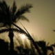 Spikes and Palm Trees Silhouette at the Sunset - VideoHive Item for Sale