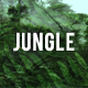 Jungle Ambience Loop