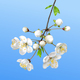 Spring Blooming Branch - GraphicRiver Item for Sale
