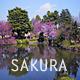 Sakura Park - VideoHive Item for Sale