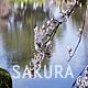 Sakura Lake - VideoHive Item for Sale