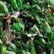 Piles of Compressed Plastic Bottles Prepared for Recycling - VideoHive Item for Sale