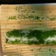Cook Makes a Green Sushi Roll - VideoHive Item for Sale