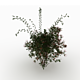 Wild Rose Bush - 3DOcean Item for Sale