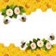 Bees and Honeycombs and Flowers. - GraphicRiver Item for Sale