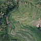 Rice terraces - VideoHive Item for Sale