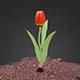 Animated Tulip Flower - 3DOcean Item for Sale