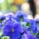 Flowers Park Walking People - VideoHive Item for Sale