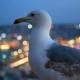 Fly Gull Bird City Light - VideoHive Item for Sale