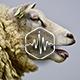 Flock of Sheep Loop