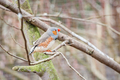 zebra finch - PhotoDune Item for Sale