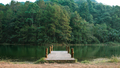 Wooden bridge in middle of the forest - PhotoDune Item for Sale