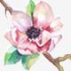 Fiorello - Florist and Flower Shop Theme - ThemeForest Item for Sale
