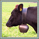 Bells on Cow