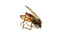 Deadly mosquito on a white background - PhotoDune Item for Sale