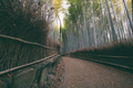 Wandering through the Bamboo Forest - PhotoDune Item for Sale