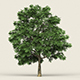 Game Ready Forest Tree 03 - 3DOcean Item for Sale