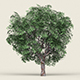 Game Ready Forest Tree 05 - 3DOcean Item for Sale