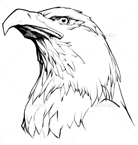 Eagle on White