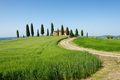 Farm villa with cypresses and crops in Tuscany - PhotoDune Item for Sale