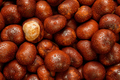 Wet Conkers - PhotoDune Item for Sale