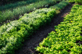 Vegetable garden - PhotoDune Item for Sale