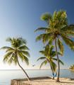 Tropical Island Beach With Hammock - PhotoDune Item for Sale