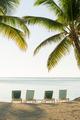 Tropical Island Deckchairs - PhotoDune Item for Sale