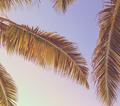 Retro Tropical Palm Tree - PhotoDune Item for Sale