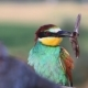 Exotic Bird with a Big Night Butterfly in the Beak - VideoHive Item for Sale
