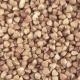 Pour Grain on Grain - VideoHive Item for Sale