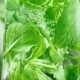 Bubbles on the Leaves of Mint in a Glass of Water - VideoHive Item for Sale