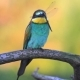 Colored Bird Holds a Blue Dragonfly on the Beak Sitting on a Branch - VideoHive Item for Sale