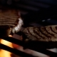 of Steaks on Restaurant Grill with Fire Flames, Chef Turns Them Over - VideoHive Item for Sale
