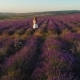 Happy Girl Walking in Lavender Field at Sunset. Aerial Shoot - VideoHive Item for Sale