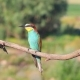 Exotic Birds Sit on a Dry Branch Line - VideoHive Item for Sale