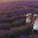 Two Friends Girls Walking with a Picnic Basket on the Field of Lavender - VideoHive Item for Sale